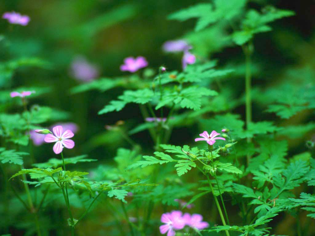 الأعشاب دواء لكل داء